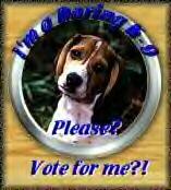 vote331.gif